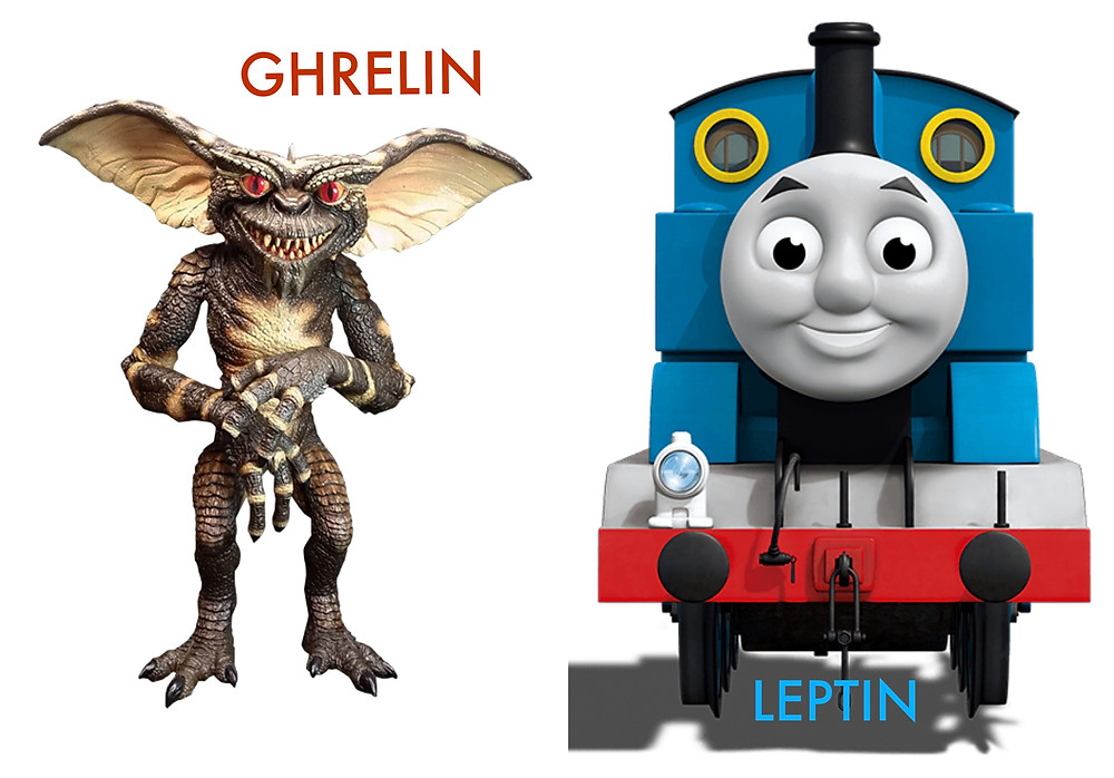 Hunger Hormones Ghrelin Leptin