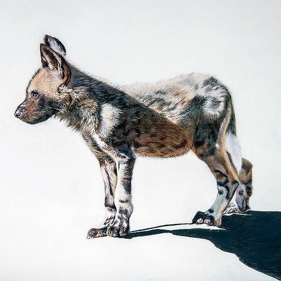 AFRICAN PAINTED DOG II | Original | Print