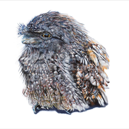 TAWNY FROGMOUTH | Print