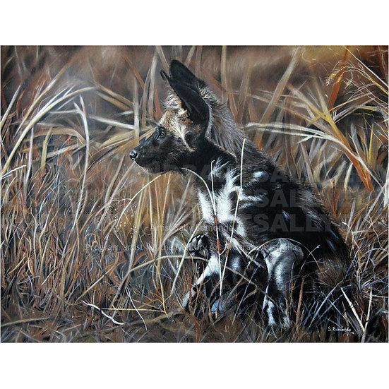 AFRICAN PAINTED DOG | Print only 1 available