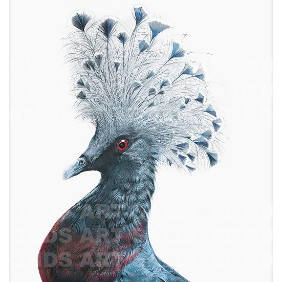 VICTORIA CROWNED PIGEON | Print
