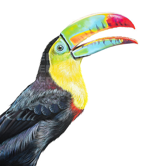 TOUCAN PLAY AT THAT GAME! | Print