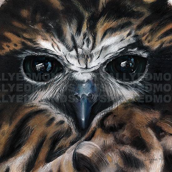 BOOBOOK OWL   Print