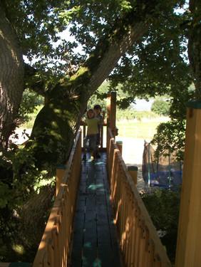 Bridge In The Canopy