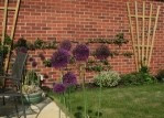 Fan Trellising With Climbing Plants 1 Year later