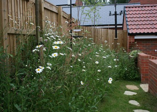 Wildflower Area In June