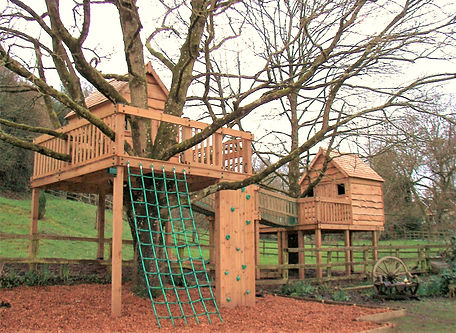 Treehouses constructed around two large
