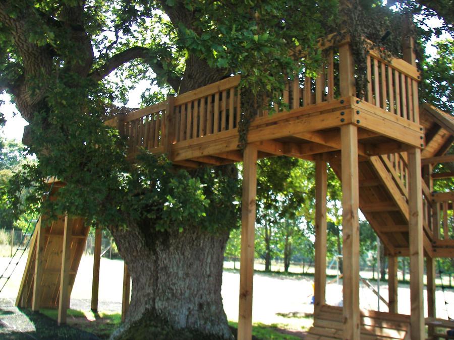 Bridge Through The Tree Canopy