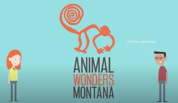 What Animals Wear