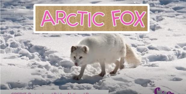 Animal Winter Coats