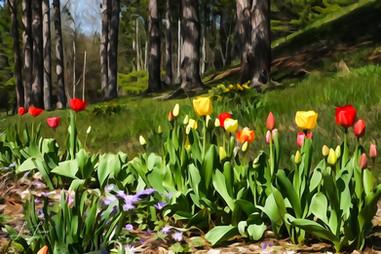 painted tulips - Copy.jpg
