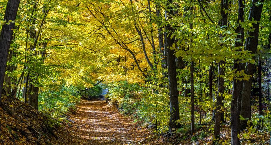 following trails - Copy.jpg
