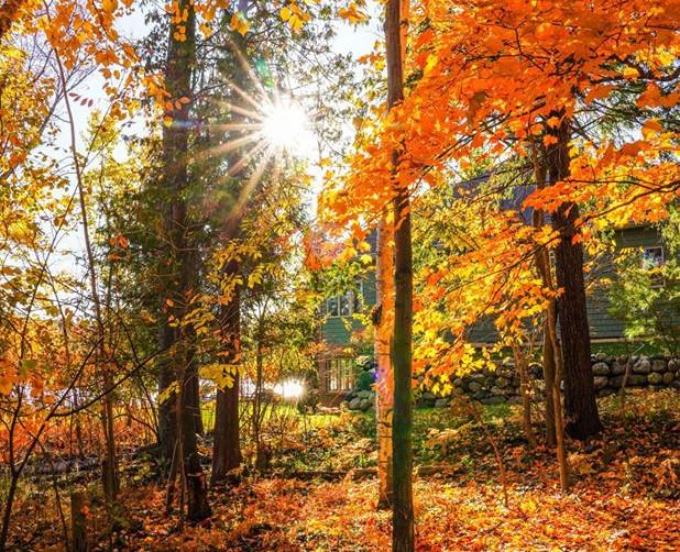 fall colors - Copy.jpg