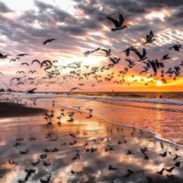 Sea birds in flight - Copy.jpg