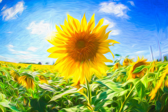 acryllic sunflower 2020.jpg