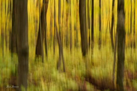 abstract trees - Copy.jpg