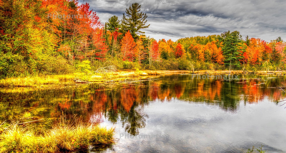 fall on the pond.jpg