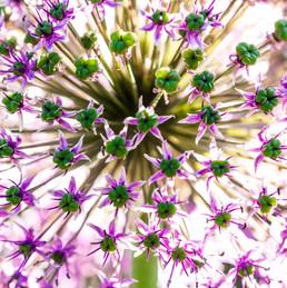 purple flower close up.jpg