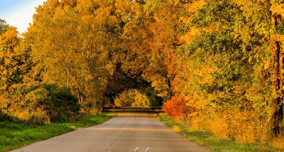 tunnel of trees - Copy.jpg