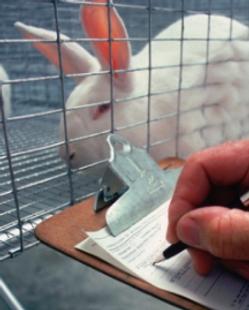 animal_testing.png