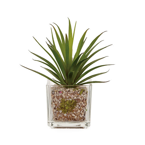 Glass Potted Faux Echeveria - Grass