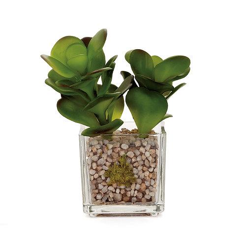 Glass Potted Faux Echeveria - Jade