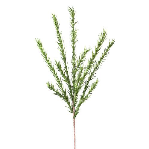 Desert Pine Stem