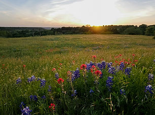 Rocosa Ridge Ranch landscape-web-32.jpg