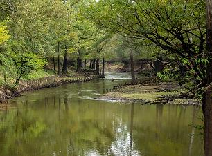 Cypress Bayou-landscape-web-41.jpg