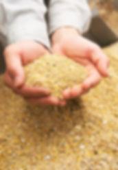 お米、発酵飼料、カキガラ、とうもろこしなど混ぜ合わせたエサ.jpg