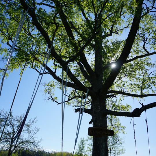 Kiigepuu