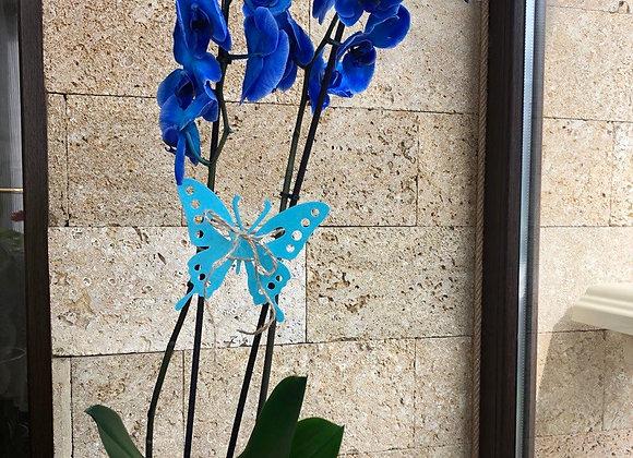 Орхидея синяя двух веточная