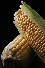 Corn Nahaufnahme