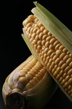 Corn Close-Up