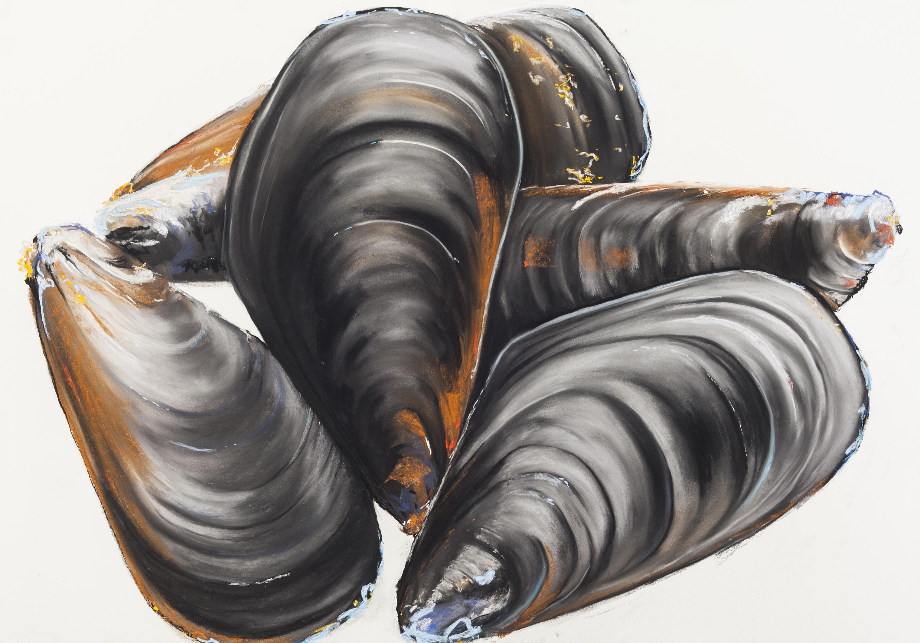 Miesmuscheln