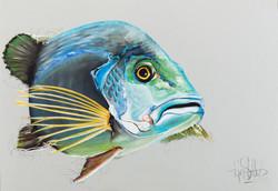 Tropenfisch