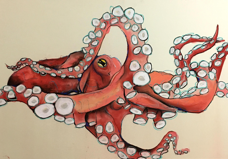 Oktopus schwimmend