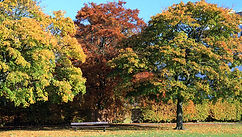 trees changing color - Petr.jpg