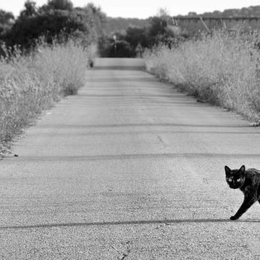 """""""Oh no! I'm doomed! A black cat just crossed my path."""", once said a millionaire."""