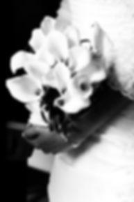 _MG_9656_cr_bw.jpg