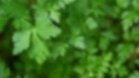 Herb%20Garden%20_edited.jpg