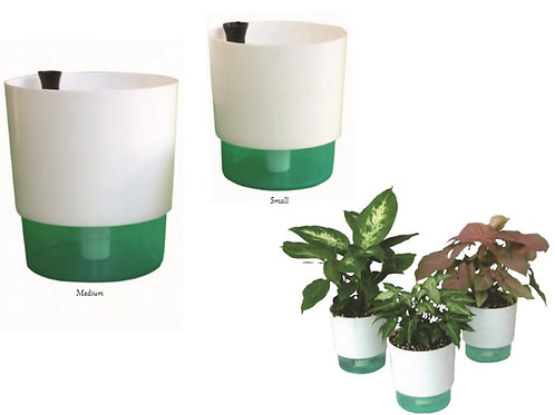 Self-Watering Container