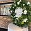 Thumbnail: Evergreen cake stand
