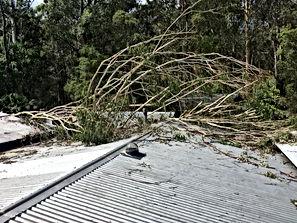 Tree Impact To Roof