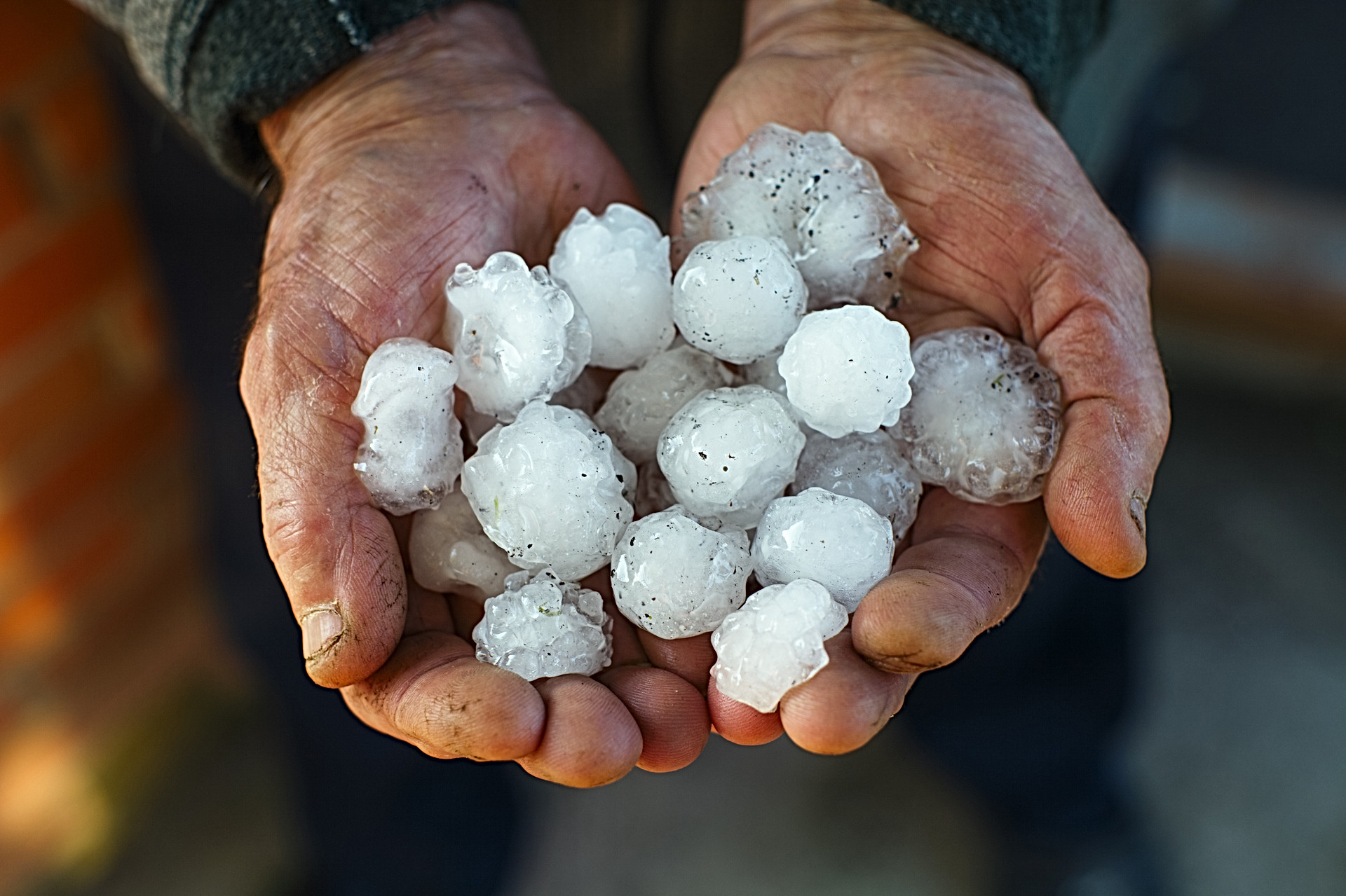 A handful of large hail in hands..jpg