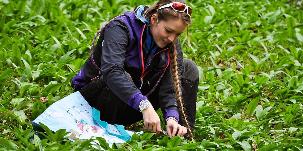 Alla scoperta delle erbe selvatiche: l'aglio orsino