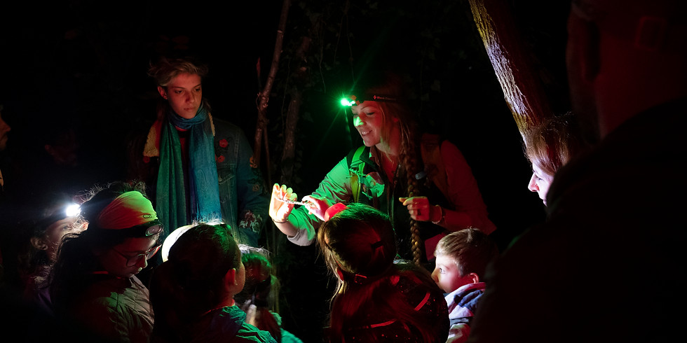 La notte dei boschi