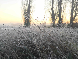 View across the vines, January.jpg