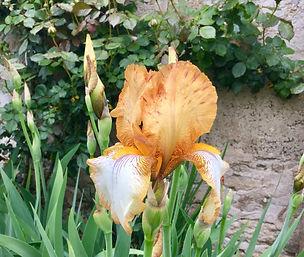 Iris emblem.jpg