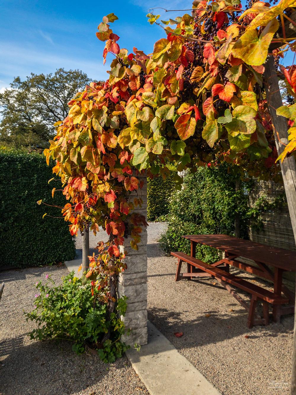 Rosendal's trädgård (Photo: www.NicoleJoosPhotography.com)